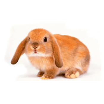 """""""Кролики - это не только ценный мех..."""""""